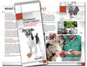 Veterinary Brochures